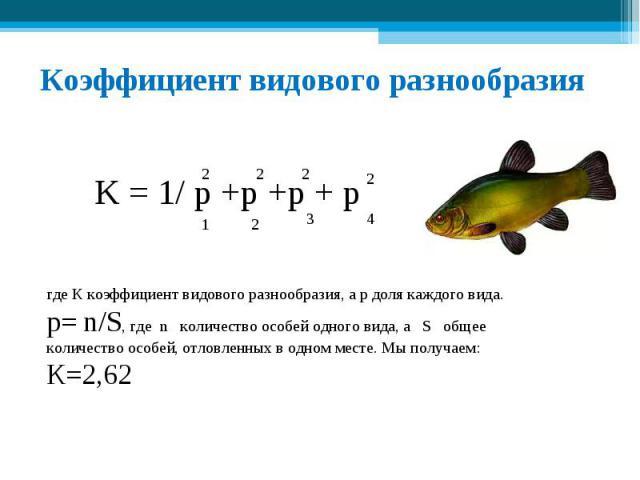 Коэффициент видового разнообразия где К коэффициент видового разнообразия, а р доля каждого вида. р= n/S, где n количество особей одного вида, а S общее количество особей, отловленных в одном месте. Мы получаем: К=2,62