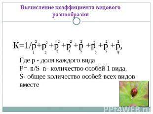 Вычисление коэффициента видового разнообразияК=1/р+р +р +р +р +р +р +р, Где р -