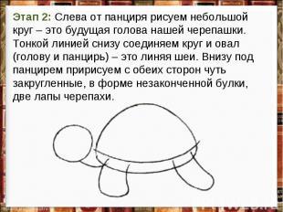 Этап 2: Слева от панциря рисуем небольшой круг – это будущая голова нашей черепа