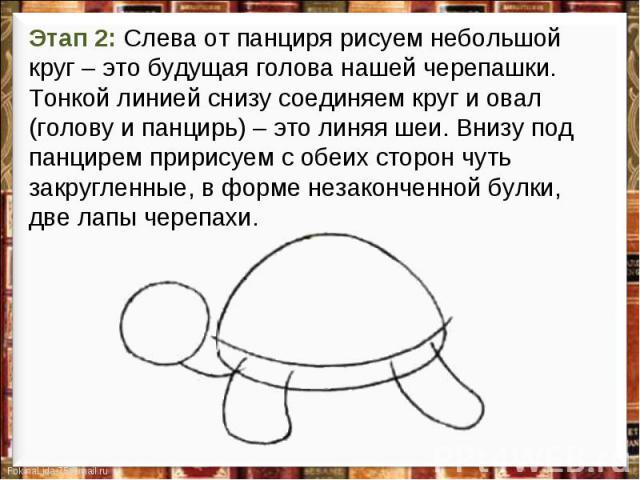 Этап 2: Слева от панциря рисуем небольшой круг – это будущая голова нашей черепашки. Тонкой линией снизу соединяем круг и овал (голову и панцирь) – это линяя шеи. Внизу под панцирем пририсуем с обеих сторон чуть закругленные, в форме незаконченной б…