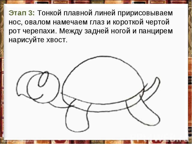 Этап 3: Тонкой плавной линей пририсовываем нос, овалом намечаем глаз и короткой чертой рот черепахи. Между задней ногой и панцирем нарисуйте хвост.