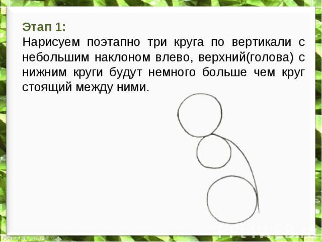 Этап 1: Нарисуем поэтапно три круга по вертикали с небольшим наклоном влево, верхний(голова) с нижним круги будут немного больше чем круг стоящий между ними.