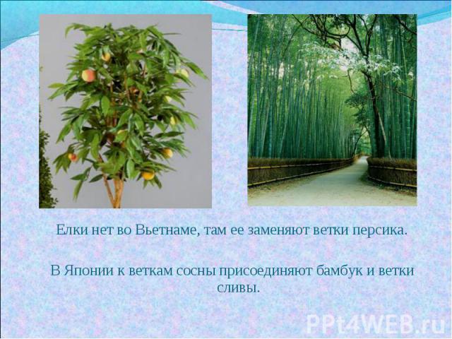 Елки нет во Вьетнаме, там ее заменяют ветки персика.В Японии к веткам сосны присоединяют бамбук и ветки сливы.