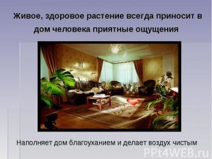 Живое, здоровое растение всегда приносит в дом человека приятные ощущения Наполн