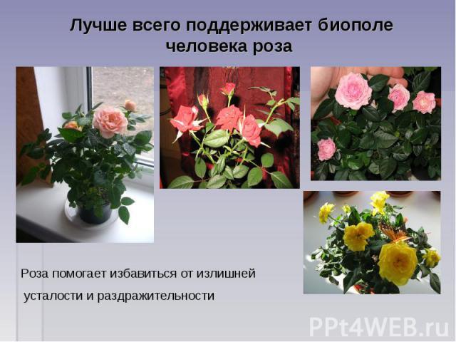 Лучше всего поддерживает биополе человека роза Роза помогает избавиться от излишней усталости и раздражительности