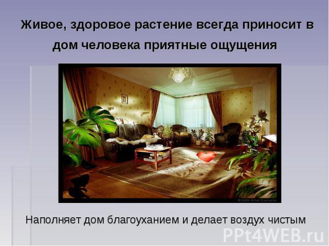 Живое, здоровое растение всегда приносит в дом человека приятные ощущения Наполняет дом благоуханием и делает воздух чистым