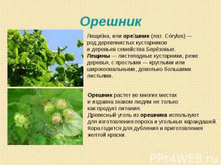 Орешник Лещина, или орешник (лат. Córylus)— род деревянистых кустарников и дере