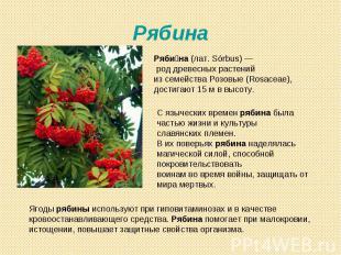 Рябина Рябина (лат. Sórbus)— род древесных растений из семейства Розовые (Rosac
