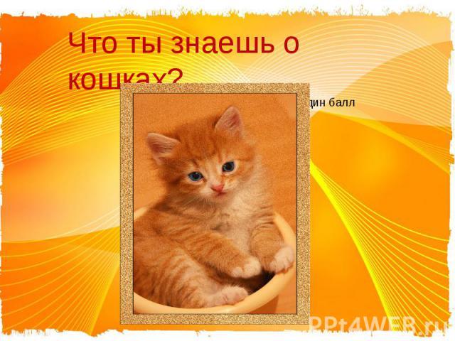 Что ты знаешь о кошках? За каждый правильный ответ – один балл