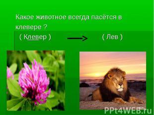 Какое животное всегда пасётся вклевере ? ( Клевер ) ( Лев )