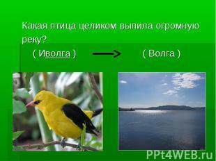 Какая птица целиком выпила огромную реку? ( Иволга ) ( Волга )