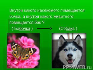 Внутри какого насекомого помещается бочка, а внутри какого животного помещается