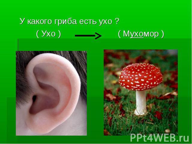 У какого гриба есть ухо ? ( Ухо ) ( Мухомор )
