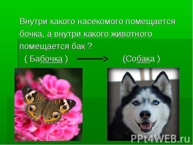 Внутри какого насекомого помещается бочка, а внутри какого животного помещается бак ? ( Бабочка ) (Собака )