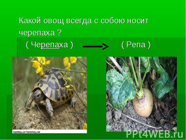 Какой овощ всегда с собою носит черепаха ? ( Черепаха ) ( Репа )