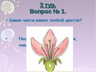 3 тур.Вопрос № 1. Какие части имеет любой цветок? Пестик, тычинка, лепесток, чаш