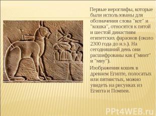 """Первые иероглифы, которые были использованы для обозначения слова """"кот"""" и """"кошка"""