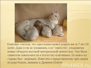 Египтяне считали, что одна кошка может родить им за 7 лет 28 котят. Даже если не