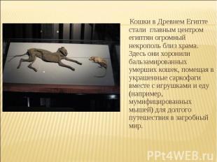Кошки в Древнем Египте стали главным центром египтян огромный некрополь близ хр