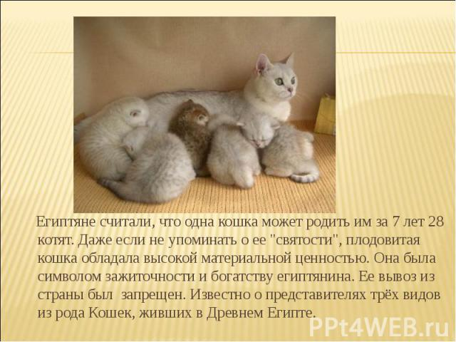 Египтяне считали, что одна кошка может родить им за 7 лет 28 котят. Даже если не упоминать о ее