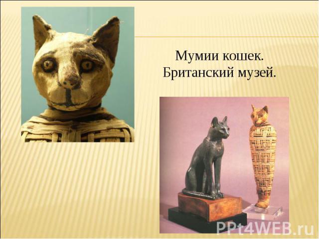 Мумии кошек.Британский музей.