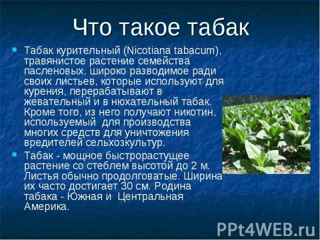 Что такое табак Табак курительный (Nicotiana tabacum), травянистое растение семейства пасленовых, широко разводимое ради своих листьев, которые используют для курения, перерабатывают в жевательный и в нюхательный табак. Кроме того, из него получают …