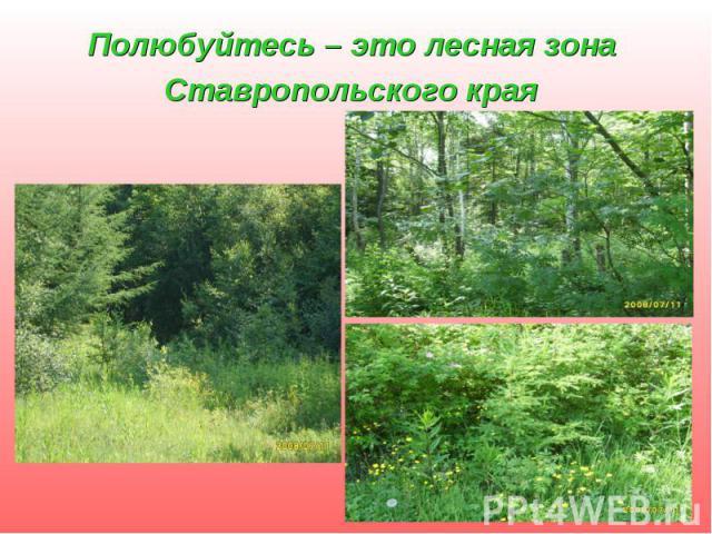 Полюбуйтесь – это лесная зона Ставропольского края