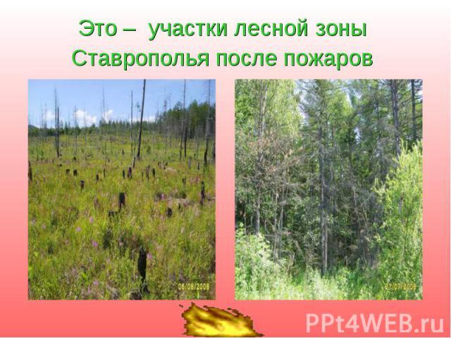 Это – участки лесной зоны Ставрополья после пожаров