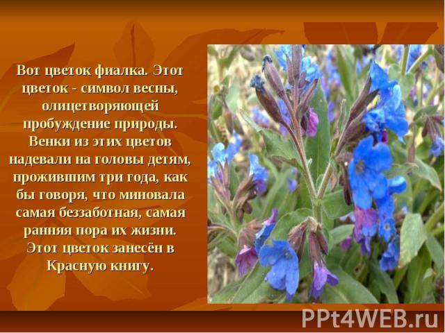 Вот цветок фиалка. Этот цветок - символ весны, олицетворяющей пробуждение природы. Венки из этих цветов надевали на головы детям, прожившим три года, как бы говоря, что миновала самая беззаботная, самая ранняя пора их жизни.Этот цветок занесён в Кра…