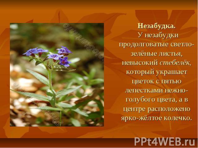 Незабудка. У незабудки продолговатые светло-зелёные листья, невысокий стебелёк, который украшает цветок с пятью лепестками нежно-голубого цвета, а в центре расположено ярко-жёлтое колечко.