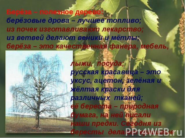 Берёза – полезное дерево:берёзовые дрова – лучшее топливо;из почек изготавливают лекарство;из ветвей делают веники и мётлы;берёза – это качественная фанера, мебель, лыжи, посуда; русская красавица – это уксус, ацетон, зелёная и жёлтая краски для раз…