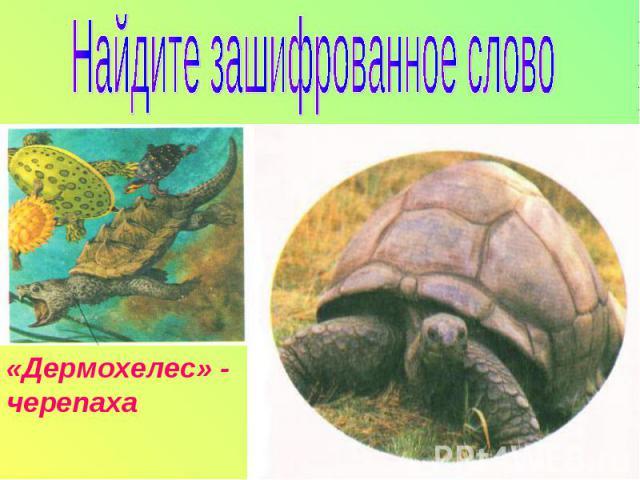 Найдите зашифрованное слово«Дермохелес» - черепаха