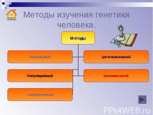 Методы изучения генетики человека.