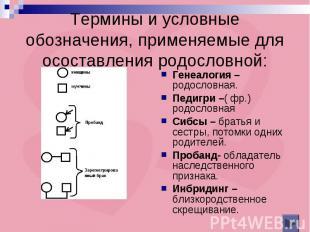 Термины и условные обозначения, применяемые для осоставления родословной: Генеал