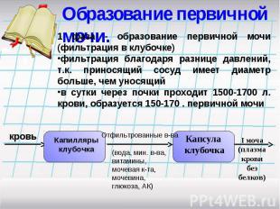 Образование первичной мочи. 1 фаза - образование первичной мочи (фильтрация в кл