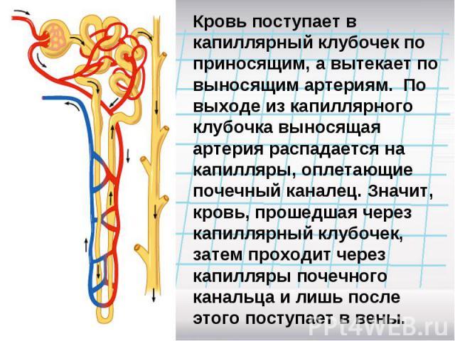 Кровь поступает в капиллярный клубочек по приносящим, а вытекает по выносящим артериям. По выходе из капиллярного клубочка выносящая артерия распадается на капилляры, оплетающие почечный каналец. Значит, кровь, прошедшая через капиллярный клубочек, …
