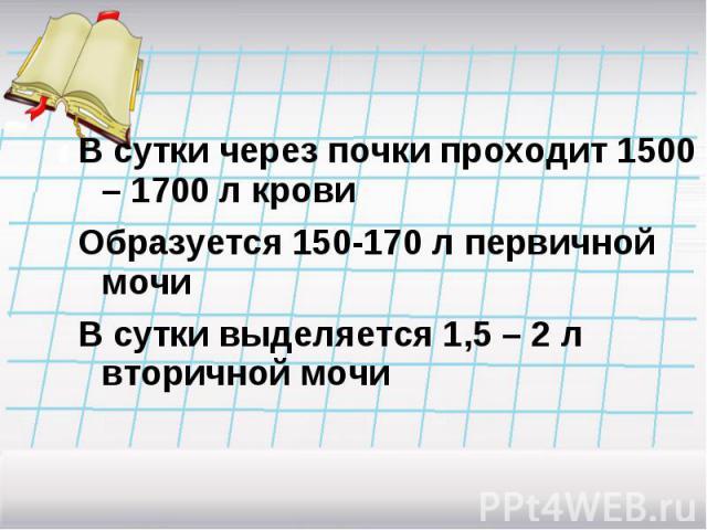 В сутки через почки проходит 1500 – 1700 л кровиОбразуется 150-170 л первичной мочиВ сутки выделяется 1,5 – 2 л вторичной мочи