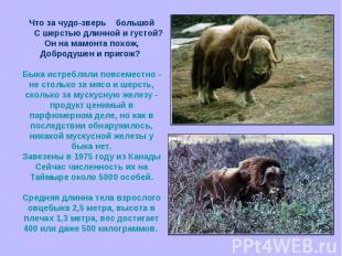 Что за чудо-зверь большой С шерстью длинной и густой?Он на мамонта похож,Доброду