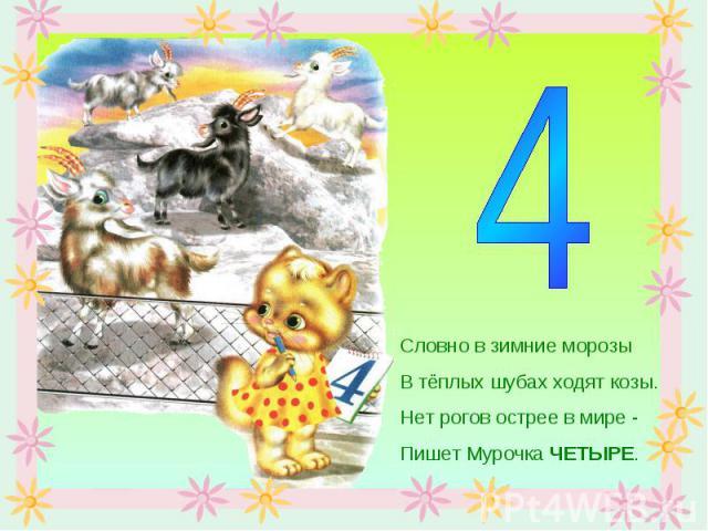 Словно в зимние морозыВ тёплых шубах ходят козы.Нет рогов острее в мире -Пишет Мурочка ЧЕТЫРЕ.