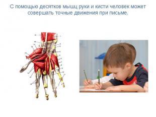 С помощью десятков мышц руки и кисти человек может совершать точные движения при