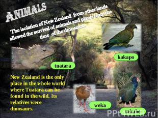 animals The isolation of New Zealand from other lands allowed the survival of an