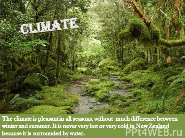 Climate The climate is pleasant in all seasons, without much difference between winter and summer. It is never very hot or very cold in New Zealand because it is surrounded by water.