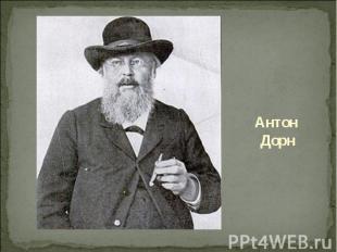 Антон Дорн