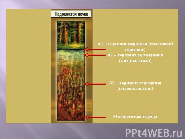 А1 - горизонт перегноя (гумусовый горизонт)А2 – горизонт вымывания (элювиальный)А3 – горизонт вмывания (иллювиальный)Материнская порода