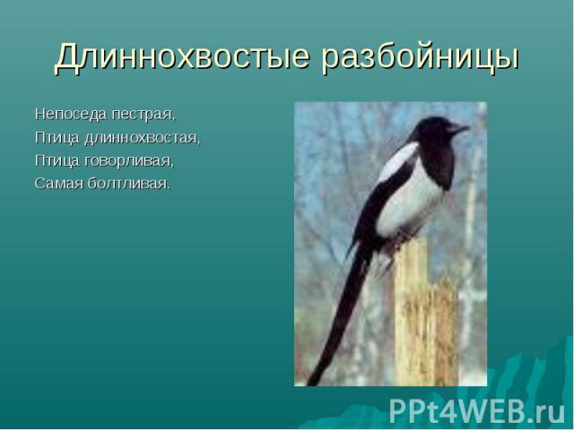 Длиннохвостые разбойницы Непоседа пестрая,Птица длиннохвостая,Птица говорливая,Самая болтливая.