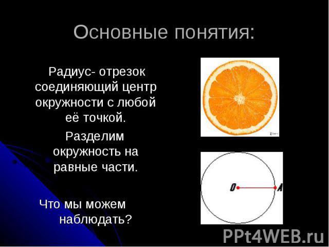Основные понятия: Радиус- отрезок соединяющий центр окружности с любой её точкой. Разделим окружность на равные части.Что мы можем наблюдать?