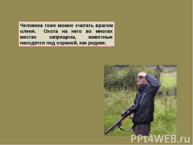 Человека тоже можно считать врагом оленя. Охота на него во многих местах запрещена, животные находятся под охраной, как редкие.
