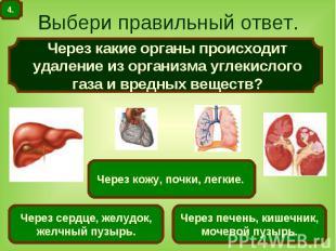 Выбери правильный ответ. Через какие органы происходит удаление из организма угл