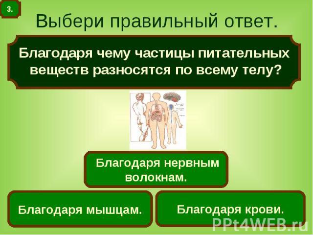 Выбери правильный ответ. Благодаря чему частицы питательных веществ разносятся по всему телу?