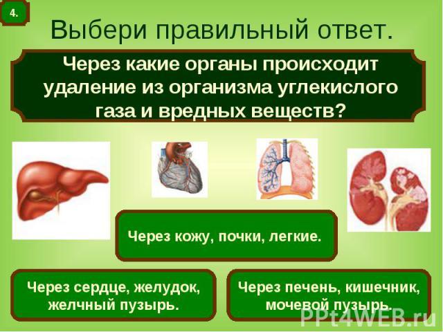 Выбери правильный ответ. Через какие органы происходит удаление из организма углекислого газа и вредных веществ?